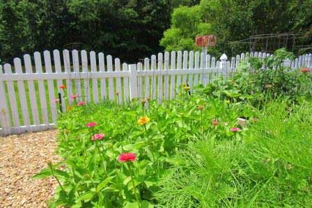 flower-plantings-picket-fence