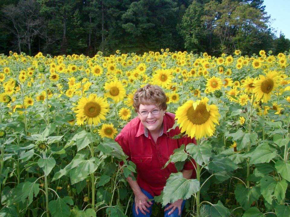 resident-sunflowers